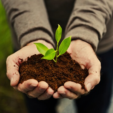 hands holding a pile of earth soil with a growing